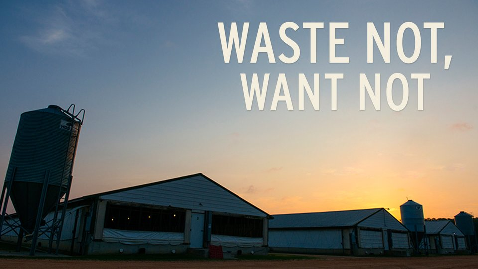 PIG-POWERED: Waste Not, Want Not